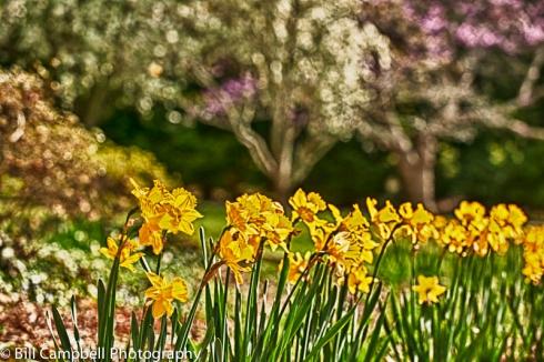 Spring HDR